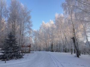 Medobory in wintertime