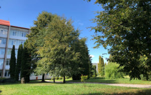 The territory of a sanatorium
