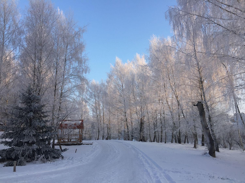 """""""Медоборы"""" зимой"""